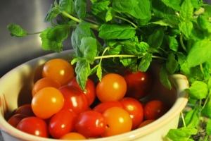 tomaatti_minttu1