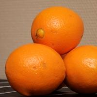 appelsiinibroileri3